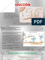 Traducciòn Biologia Molecular