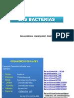 19 I Bacterias