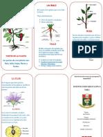 Triptico las Plantas I.E.VIRU
