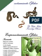 2 Serpientes VICTOR.pptmmodificada 1