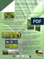 innovacionessigatokabananoplatano-100429113931-phpapp01