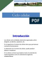II Ciclo Celular