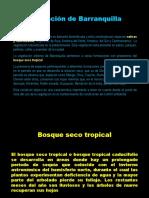 Vegetacion de Barranquilla