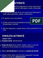 Curs 6 Lichen Plan