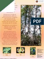 Fichas Especies Manglar Mexico