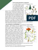 Ciclos de Vida de Las Plantas Gimnospermas y Angiospermas
