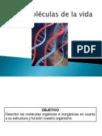 MOLECULAS-ORGANICAS-E-INORGANICAS-primero-medio.pdf