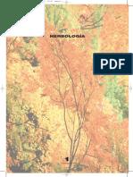 Lección 1-complemento Nat.pdf
