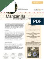 Aromaticas 03 Manzanilla