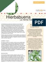 Aromaticas 06 Hierbabuena