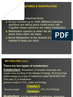 Metbolism Enzymes, & Respiration