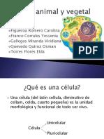 clulaanimalyvegetal-101023184244-phpapp02.pdf
