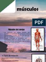 Los Músculos CTA 1