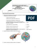 Guia 2 La Celula_clases_formas_2019.pdf