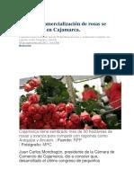 CAJAMARCA.docx