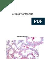 Fotos Clase 1 de histologia