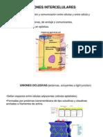 Clase Uniones Celulares - Plasmodesmos