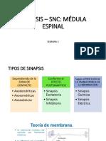 CLASE 2 SINAPSIS MEDULA.pdf