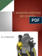 1. Anatomía Eléctrica Del Corazón