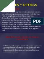 grupo 8 INTRO, DEFI, DE POLEN Y ESPORAS.pptx