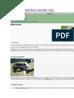 Portales de Wikipedia.docx