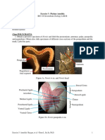 Annelida Worksheet Final