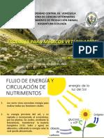 Flujo de Energía, Cadenas Tróficas, Producción Primaria y Secundaria