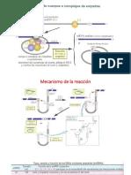 MADURACION ARN.pptx