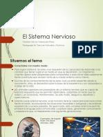 Modulo- Sistema Nervioso