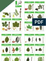 Identificare copaci