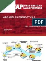 Biologia organelas de la celula