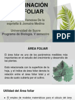 Determinacion Del Area Foliar (1)