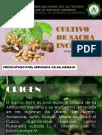 Cultivo de Sacha Inchi