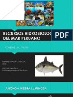 Recursos Hidrobiologicos Del Mar Peruano