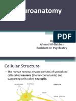 Neuro Anatomy