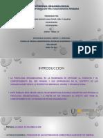 ACTIVIDAD GRUPAL Unidad 2 Paso 3 - Obtener información para solucionar el problema.pptx