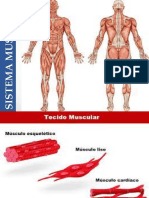 ANATOMIA SISTEMA  MUSCULAR.pdf