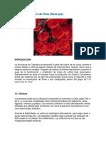 rosas Leccion 10.docx