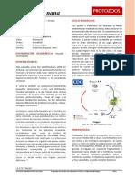 Atlas PArasitologia Endolimax NAna