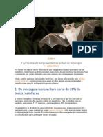 trabalho de morcegos.docx