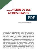 003-Oxidación de Los Ácidos Grasos y Cetogénesis.13 - Copia