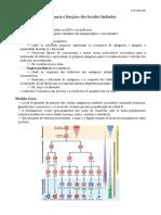 3 - Anatomia e Funções Dos Tecidos Linfoides