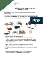 guas de invertebrados 2° año 2019.docx