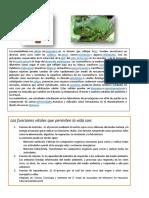 LECTURA DE CEL.docx