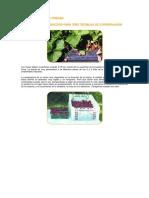 Conservación de Fresas, Piña y Duraznos