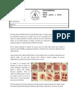 313834767-Ciclo-celular-Mitosis-y-ca-ncer-1.pdf