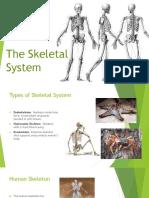 m5 skeletal system