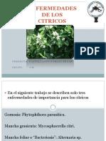 Enfermedades de Los Citricos2. Edgar