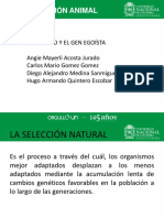 expo evolucion animal.ppt