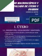 8 Tallado Útero y Ovarios